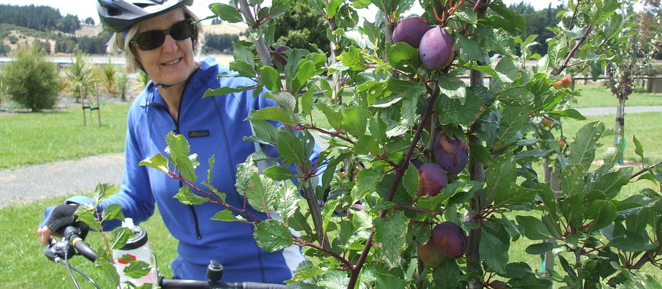 Fruit trees on the Great Taste Trail