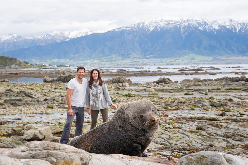 Seal watching in Kaikoura