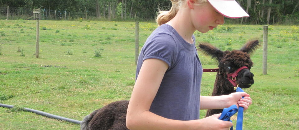 Children love our alpacas too
