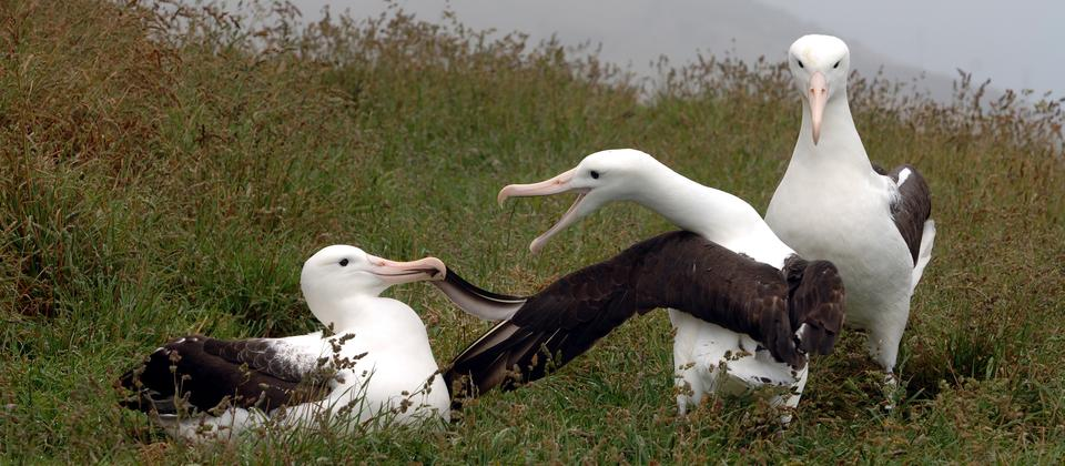 Stephen Jaquiery Albatross Group.jpg