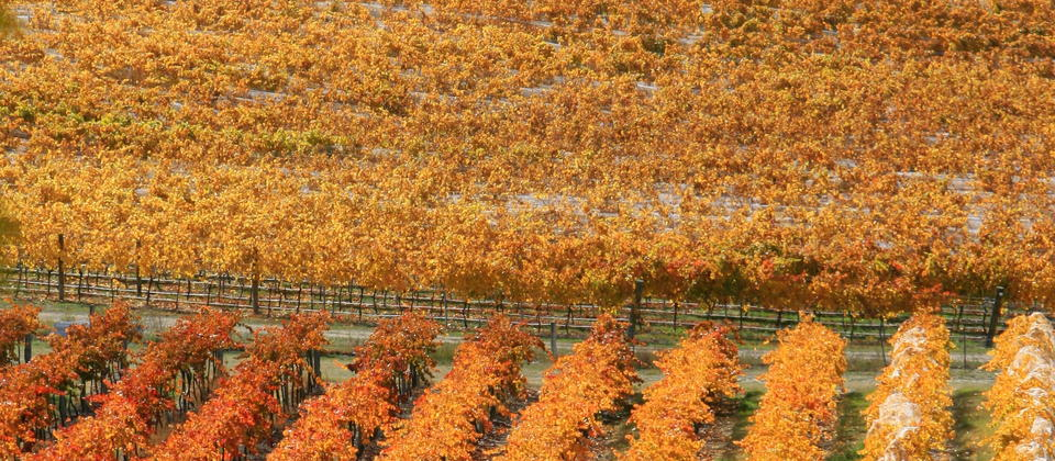 Autumn in Central Otago
