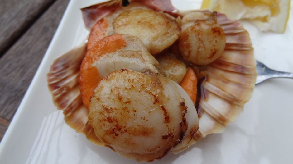 Your taste buds are sure to be impressed by fresh Coromandel scallops