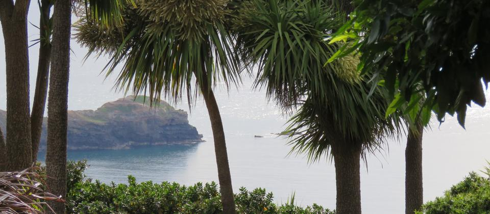 Goat point looking through New Zealand cabbage tree or Cordyline australis