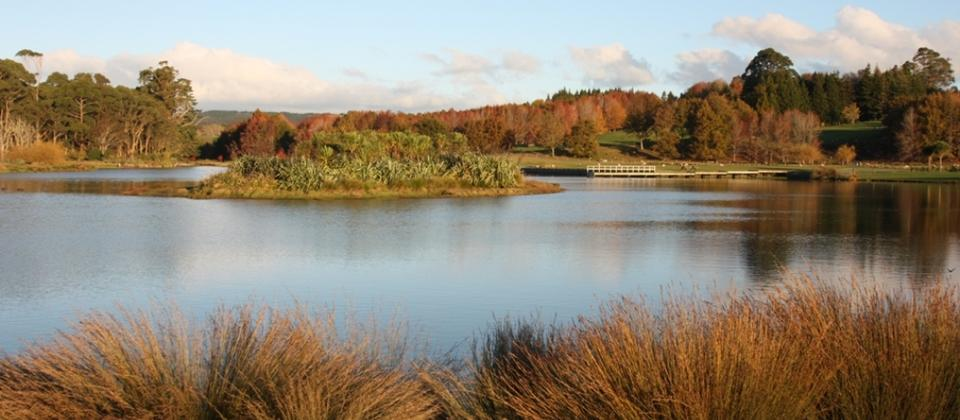 Enjoy walking around the Ayrlies Wetland. 35 acres of wonderful bird life and native planting to enjoy.