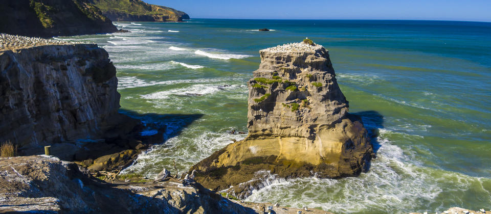 Gannet Colony at Muriwai Beach - Olie's Travels