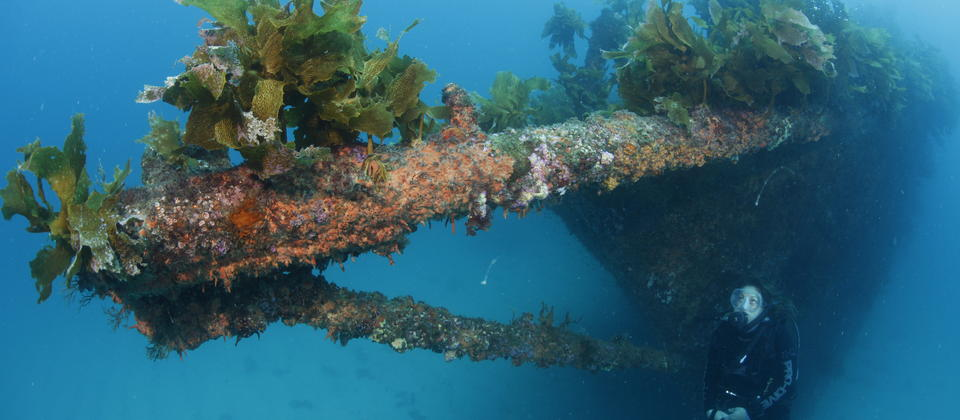The Rainbow Warrior Wreck
