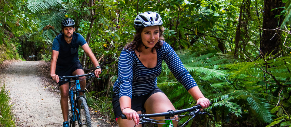 Beech forest and stunning views - Mountain Biking on the Queen Charlotte Track