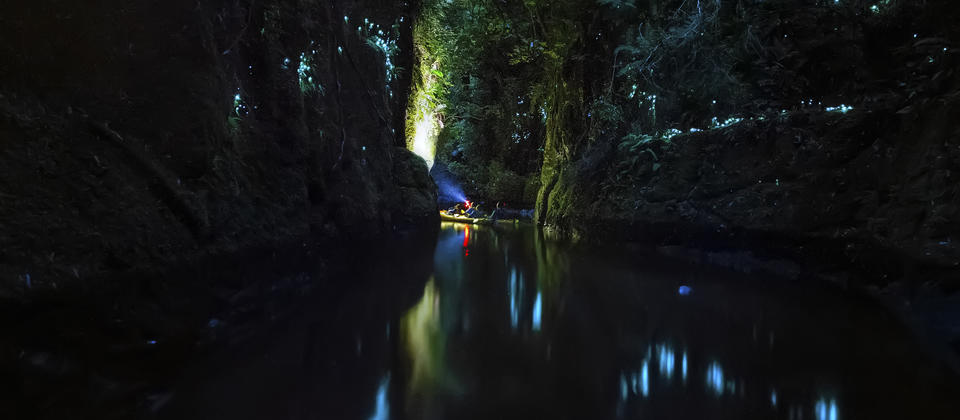 Magical Glow Worm Canyon