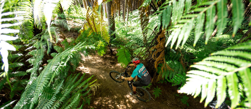 Through the NZ ferns on Budgie Smugglers trail