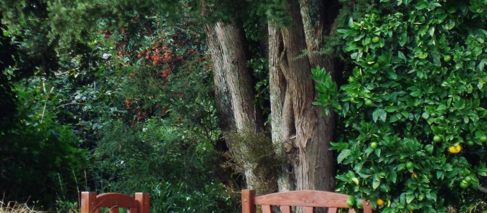 There are many special spots to relax at Kahikatea Gardens