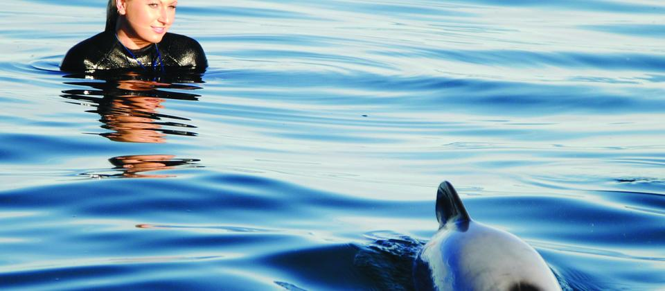 Listed as one of the top 10 marine mammal experiences in the world by Lonely Planet