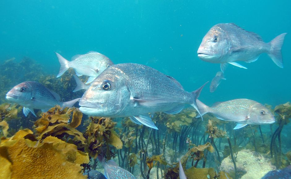 Head to Goat Island Marine Reserve to get up close to masses of colourful fish.