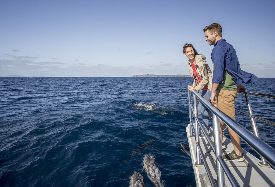 Discover marine life on the Waitemata Harbour