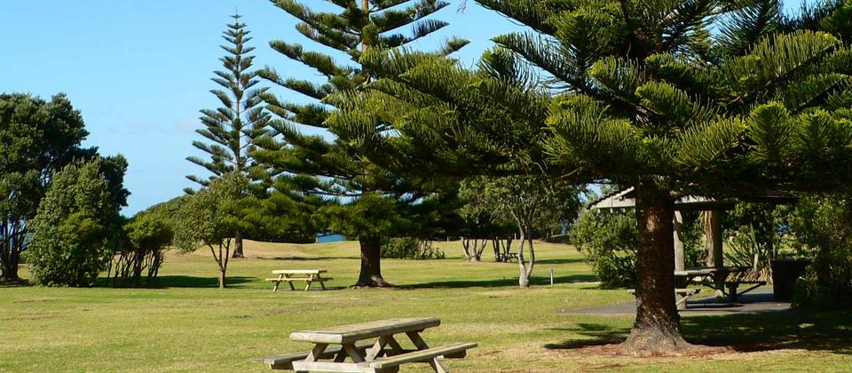 Enjoy a picnic in the shade of Norfolk pines
