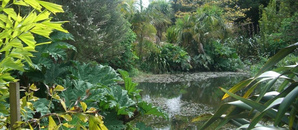 The Botanic Gardens in Auckland
