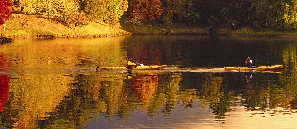 Paddle past bird life, gentle streams and lush native bush when you go kayaking on Lake McLaren.