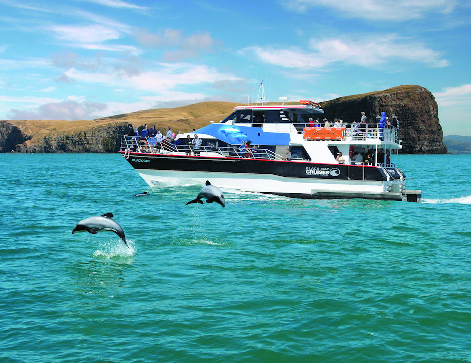 Black Cat Cruises, Akaroa