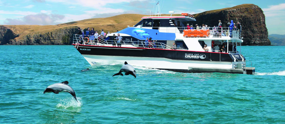 See the world's smallest dolphin in Akaroa with Black Cat Cruises.