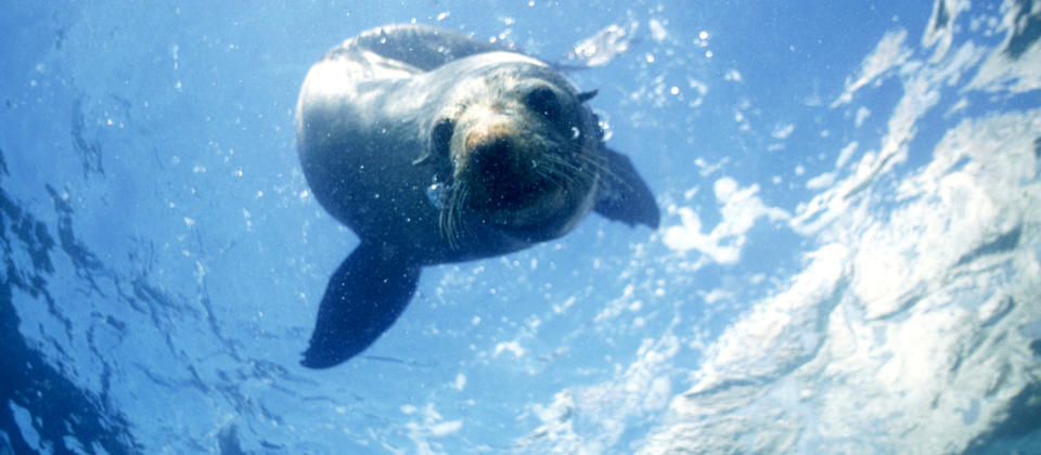 Seals are inquisitive, friendly creatures - they might swim right up for a curious look.