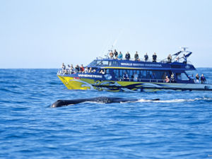 Whale watching, Kaikoura