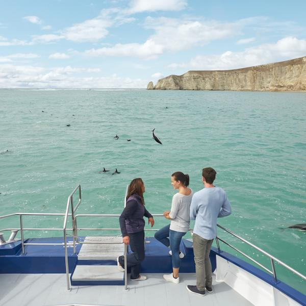 Dolphin spotting in Kaikoura