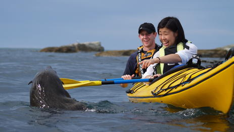Close encounters of the seal kind on a guided tour with Kaikoura Kayaks