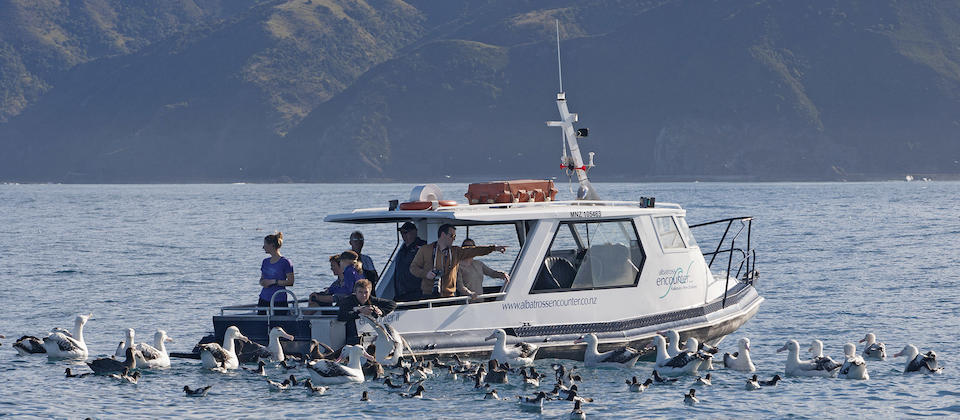 Albatross Encounters Kaikoura