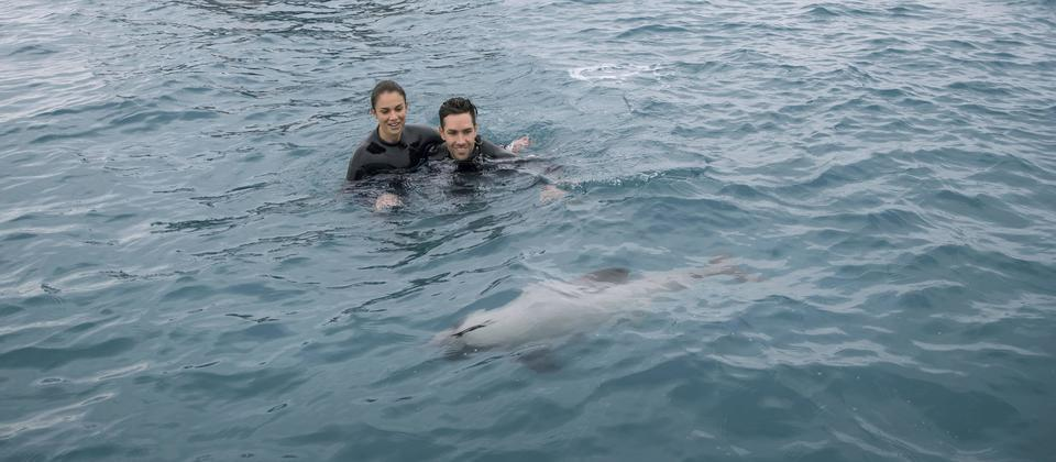 Swim with dolphins in Akaroa
