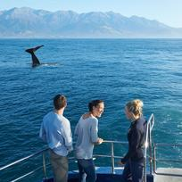 Kaikoura coastline is a marine environment so rich in nutrients that it attracts some of the most magnificent ocean life.