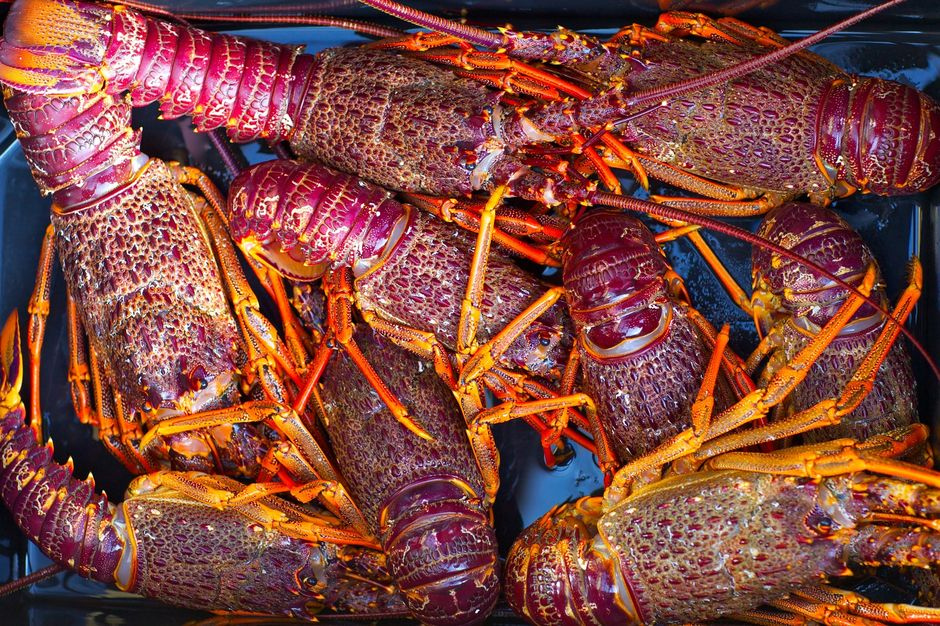 New Zealand crayfish is delicious and there is no better place to eat it than Kaikoura which means 'eat crayfish' in Māori