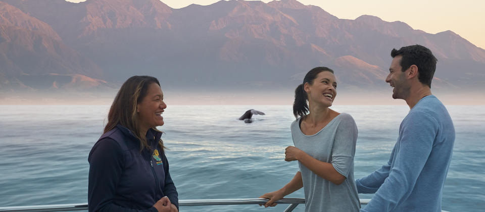 Take a whale watching tour in Kaikoura.