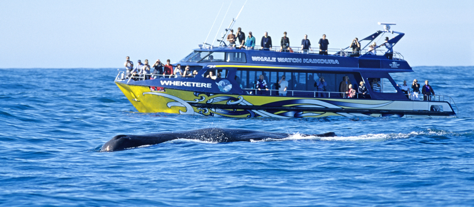 Kaikoura whale watching tours operate all year round.