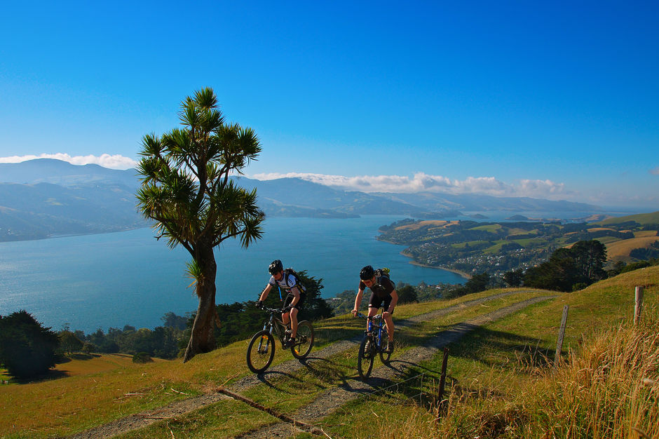 Cycle the Otago Peninsula and witness stunning views.