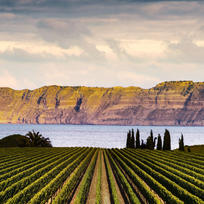 Elephant Hill Winery on the Te Awanga Coast in the Hawke's Bay is home to an award-winning restaurant and world-class wines.
