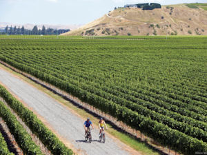Bike the vines