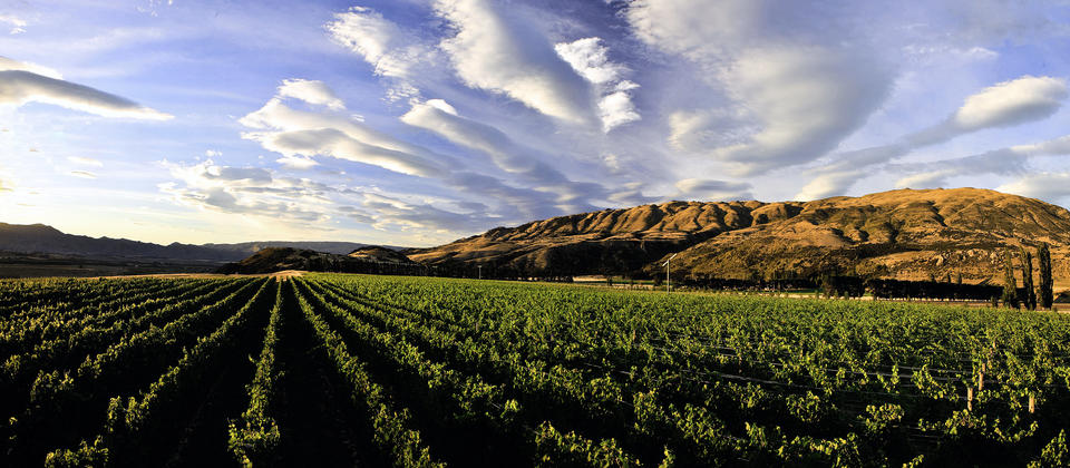 Wineries, Central Otago