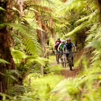 Biking the legendary Kawakawa Bay Track through the native bush with tall ferns creating a cool, green landscape that's about as gorgeous as it gets.