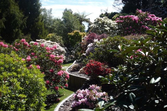 Waipahihi Botanical Reserve Lake Taupo New Zealand