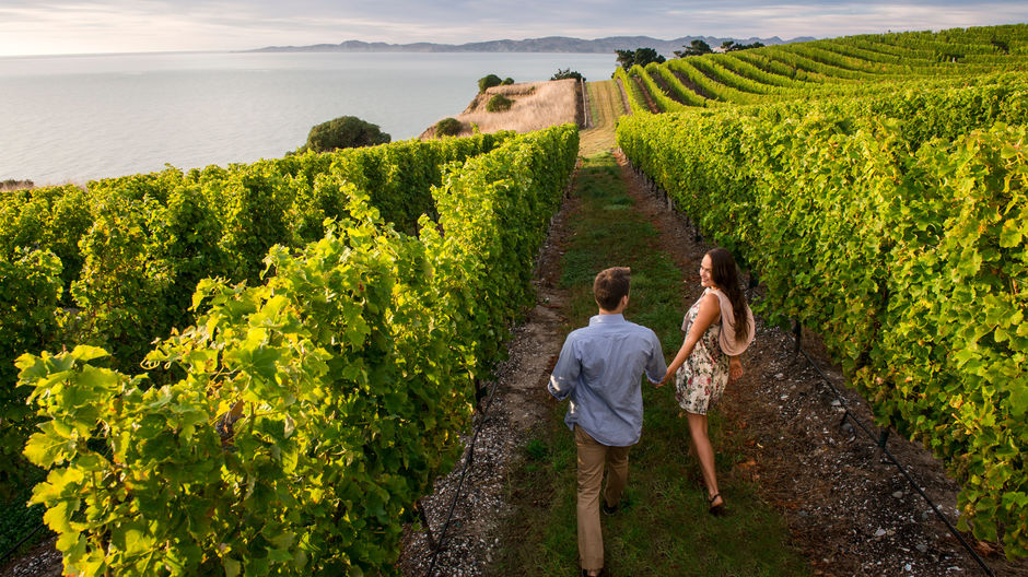 Celebrate your senses in Marlborough's wine region, home to world-class wineries, restaurants, gourmet food producers and the Marlborough Sounds.
