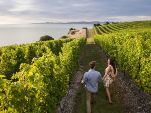 A wine enthusiast's paradise