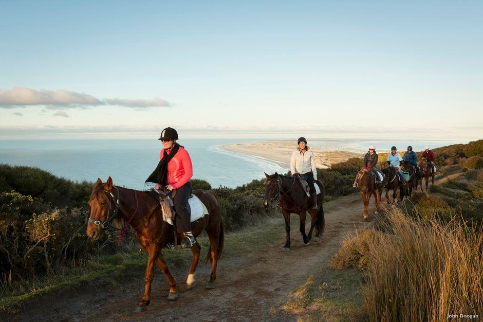 Take a horse trek in Nelson Tasman for spectacular coastal views.