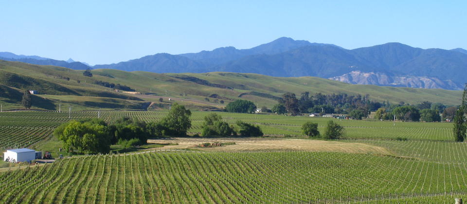 Seresin Vineyards