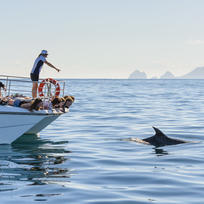 Experience the beauty of the Bay of Islands up close by swimming with the Bottlenose dolphin