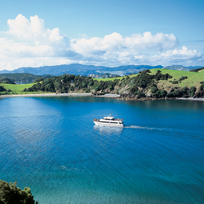 Cruise past idyllic islands, quiet coves and playful dolphins in the Bay of Islands