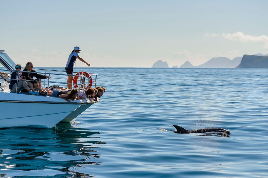 Encounter dolphins and other marine life in Northland