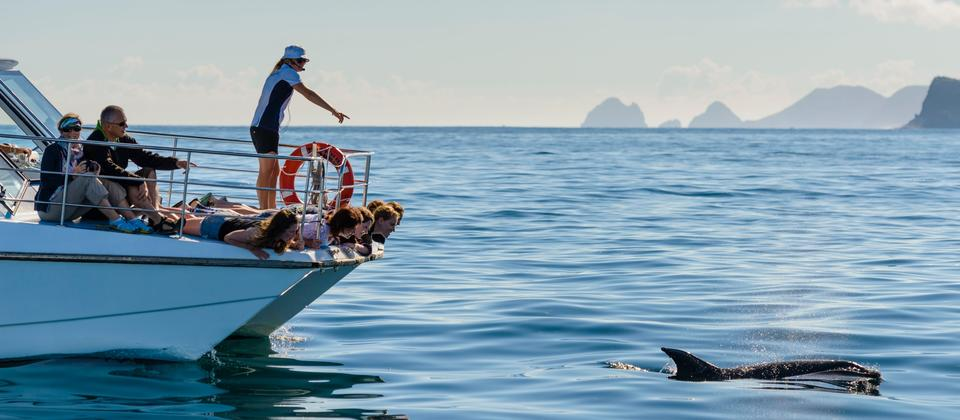 Get on the water and explore Bay of Islands' marine wonders, featuring spectacular wildlife.