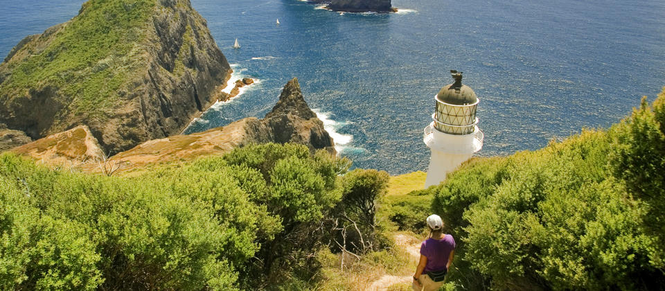 Cape Brett Walkway is a popular overnight walk in Bay of Islands, hikers will stay at DOC huts and utilise local water taxi for boat transfer.
