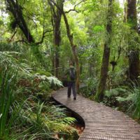 One of the walkways in the Waipoua Forest