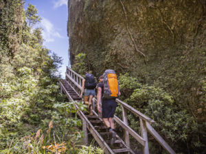 Hiking Great Barrier Island