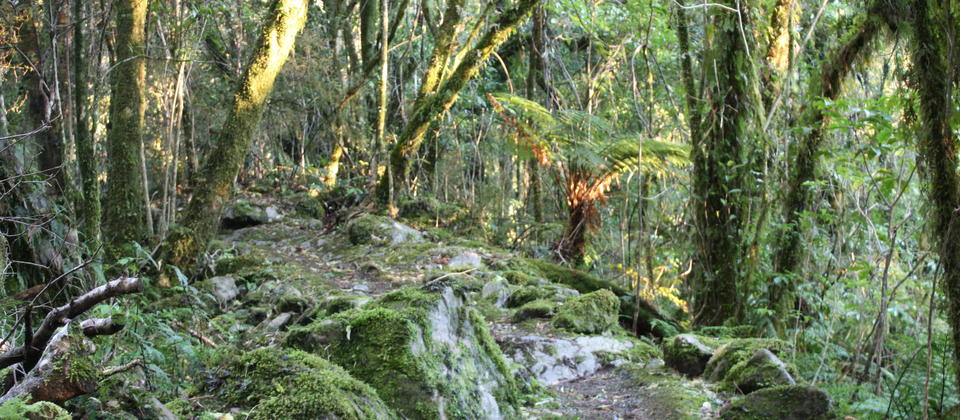 Beautiful forest on our Fox Glacier Eco Tour